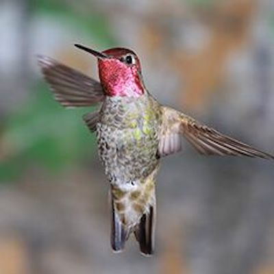 Bird Nerd Alert!